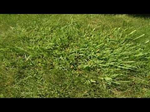 Gartentipps: Rasenpflege & Professionelle Pflegetipps Für Einen Grünen Rasen