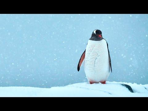 International Antarctic Expedition 2016 Film
