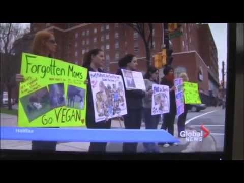 Mother's Day Vegan Protest Halifax-- Global News