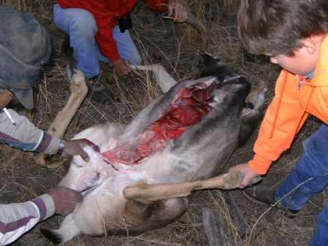 How to Gut a Deer