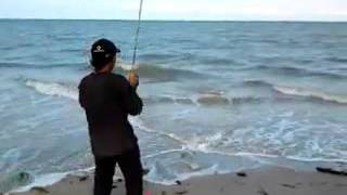 Strike queenfish (Talang-Talang) 8Kg by Tell
