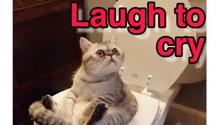 Compilation clips for funny cats    Laugh to cry 😂😁😍