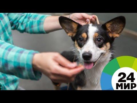 Волонтеры в Беларуси лечат бездомных животных за свой счет и дают им приют - МИР 24