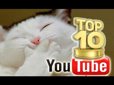 TOP 10 Videos Para CAGARSE DE RISA 2016. Los Animales Más Chistosos Del Mundo!