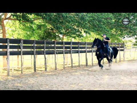 el komander a caballo