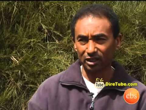 Discover Ethiopia - Ye Bale Tota - Kemele - Amazing Place to SEE