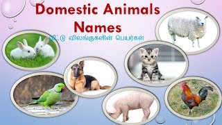 animals names in Tamil|Domestic animals| domestic animals name in Tamil and English with pictures