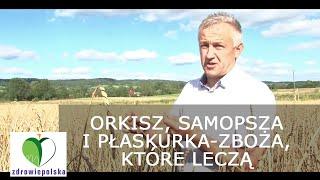"""""""ORKISZ, PŁASKURKA I SAMOPSZA - ZBOŻA, KTÓRE LECZĄ"""" Tadeusz Rolnik"""