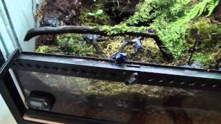 dart frogs rack update