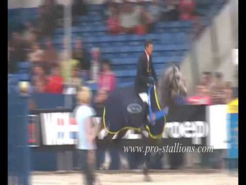 Showjumping- 'Bad Boy'