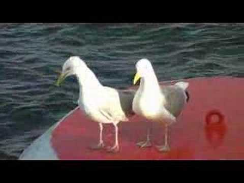 Slipping Sea Gull - Friend Helping