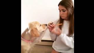 best funny animals compilation