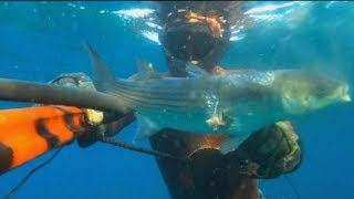Test diver spearfishing zıpkın avı deneme kefal duration 2 46
