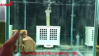 輕鬆養孔雀魚 完整版 養水篇 (常死魚或生病養水很重要)