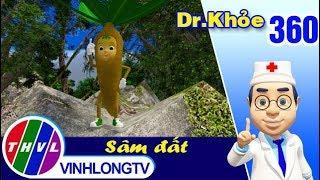 THVL | Dr. Khỏe – Tập 360: Sâm đất -  Phần 1