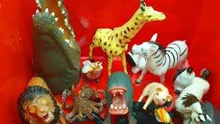 Box of Wild Animals and Sea Animals - Learn Colors with Animals For Kids