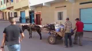 Funny - Funny Egyption PranKs Part 2