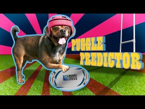 NZ v Argentina: Rugby World Cup 2015 - Puggle Predictor