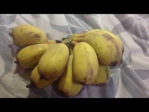 Round Bananas (Strange Fruits)