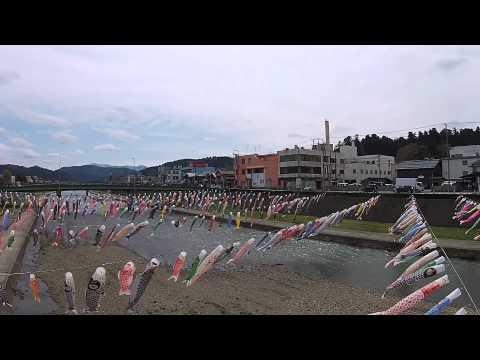 加茂川 水面を彩る鯉のぼり 加茂市