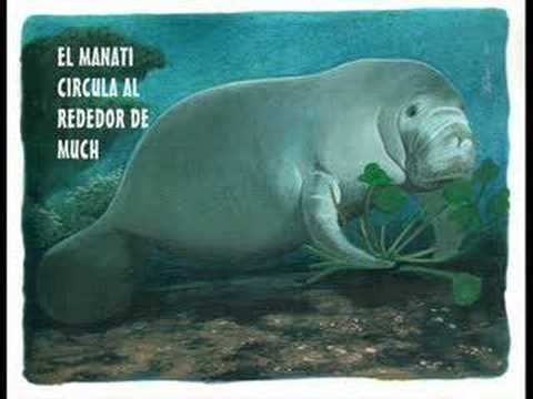 video sirena lago maracaibo: