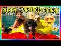 Download MAKING A PUPPY POOL OBSTACLE CHALLENGE | We Are The Davises in Mp3, Mp4 and 3GP