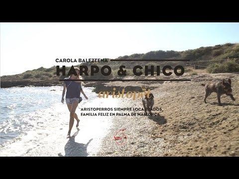 HARPO, CHICO&CAROLA BALEZTENA | VPET DE VODAFONE