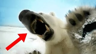 Most FEARLESS Animals In The World!