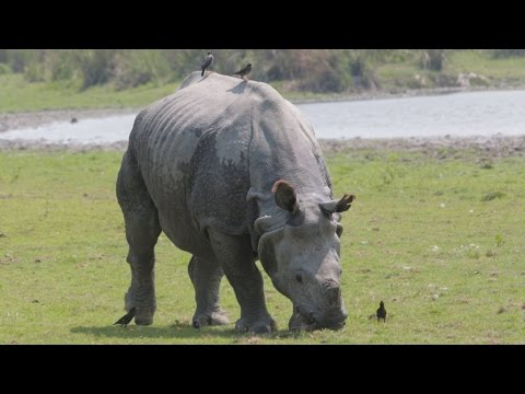 Reducing Demand for Rhino Horn in Viet Nam