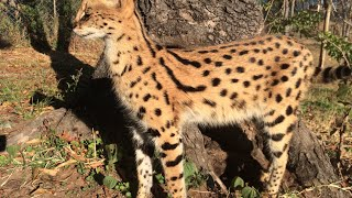 Meet the Animals of Twala Trust Animal Sanctuary - part 2