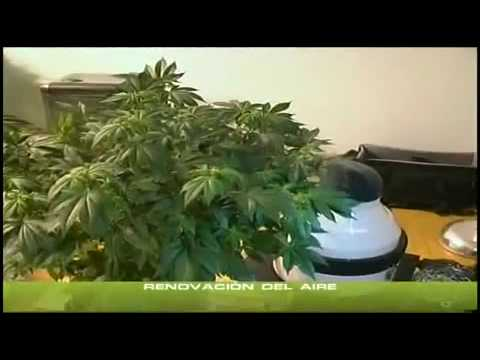 Cannabis Indoor 1 Standort des Grows/Belüftung