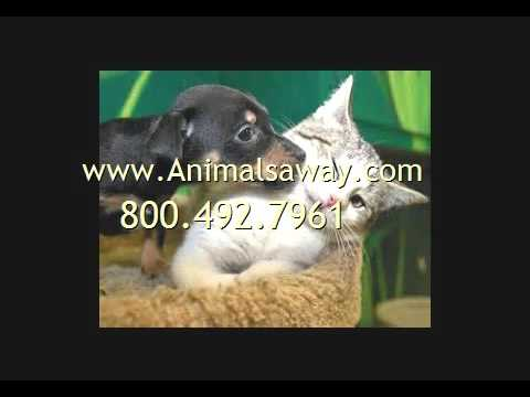 Pet Shipping To Brunei