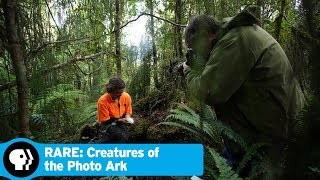 RARE: CREATURES OF THE PHOTO ARK | Next on Episode 3 | PBS