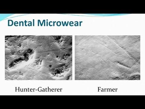 CARTA: Evolution of Human Nutrition Clark Spencer Larsen: Agriculture's Impact on Human Evolution