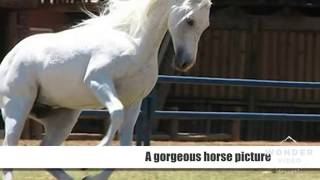 Cute and funny horse pictures