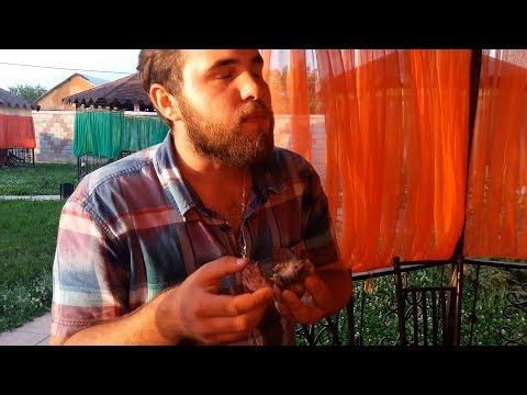 Кафе Шынар в Сайраме / Шикарный дастархан за копейки