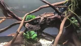 Killifish rescape and shrimp tank set up