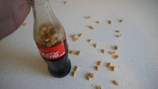 Peanuts and Coke | Taste Test