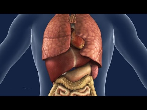 Top 10 ненужни органи в човешкото тяло