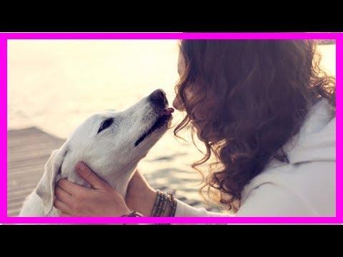 Zooanthroponose: Wenn Hunde Krankheiten auf Menschen übertragen