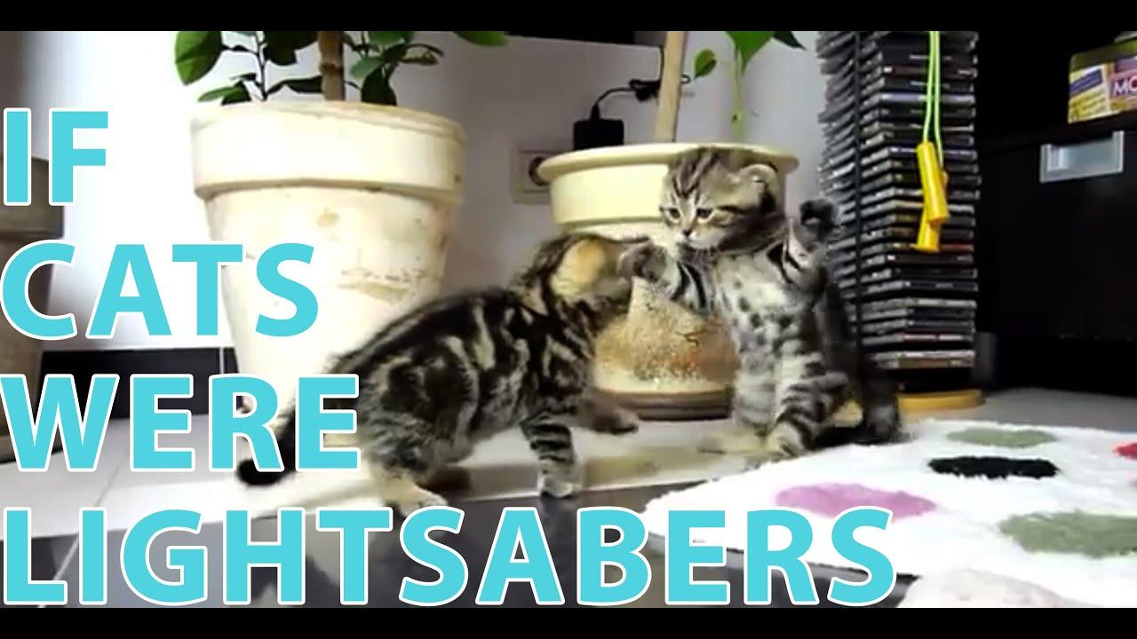 Cicák harca lézerkard-hanggal - videó