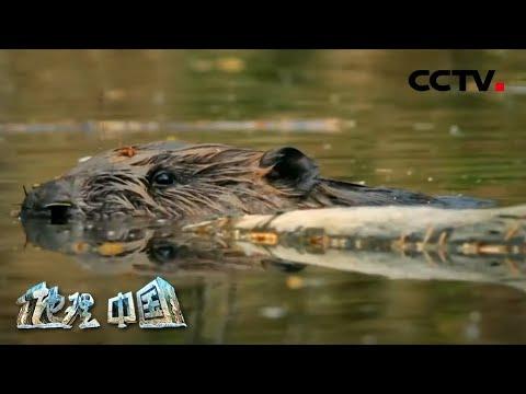 中國-地理·中國-20200709 生境迷踪·追踪水猴子