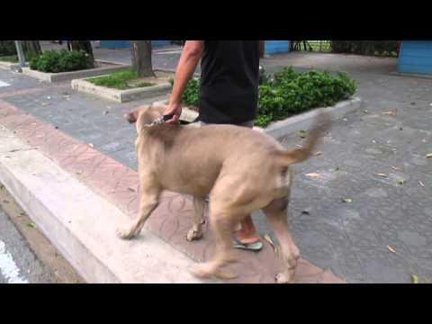 我が子を襲う犬に果敢に立ち向かうママ猫がカッコイイ!