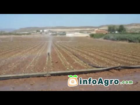 Cultivo de la lechuga. 1ª parte
