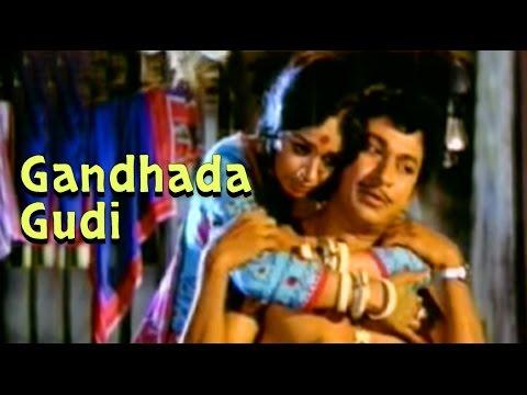Full Kannada Movie 1973   Gandhada Gudi   Rajkumar Kalpana Vishnuvardhan...