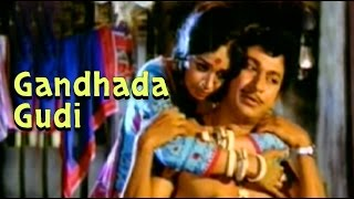 Full Kannada Movie 1973 | Gandhada Gudi | Rajkumar, Kalpana, Vishnuvardhan.