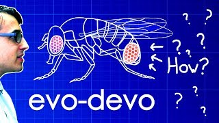 Evo-Devo (Despacito Biology Parody) | A Capella Science