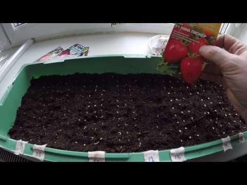 Посадка семян томатов (помидор ) на рассаду: как правильно посеять?