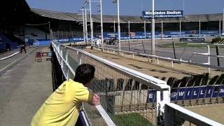 Gone to the Dogs - Presented by the KODAK PLAYSPORT HD Video Camera with Image Stabilisation