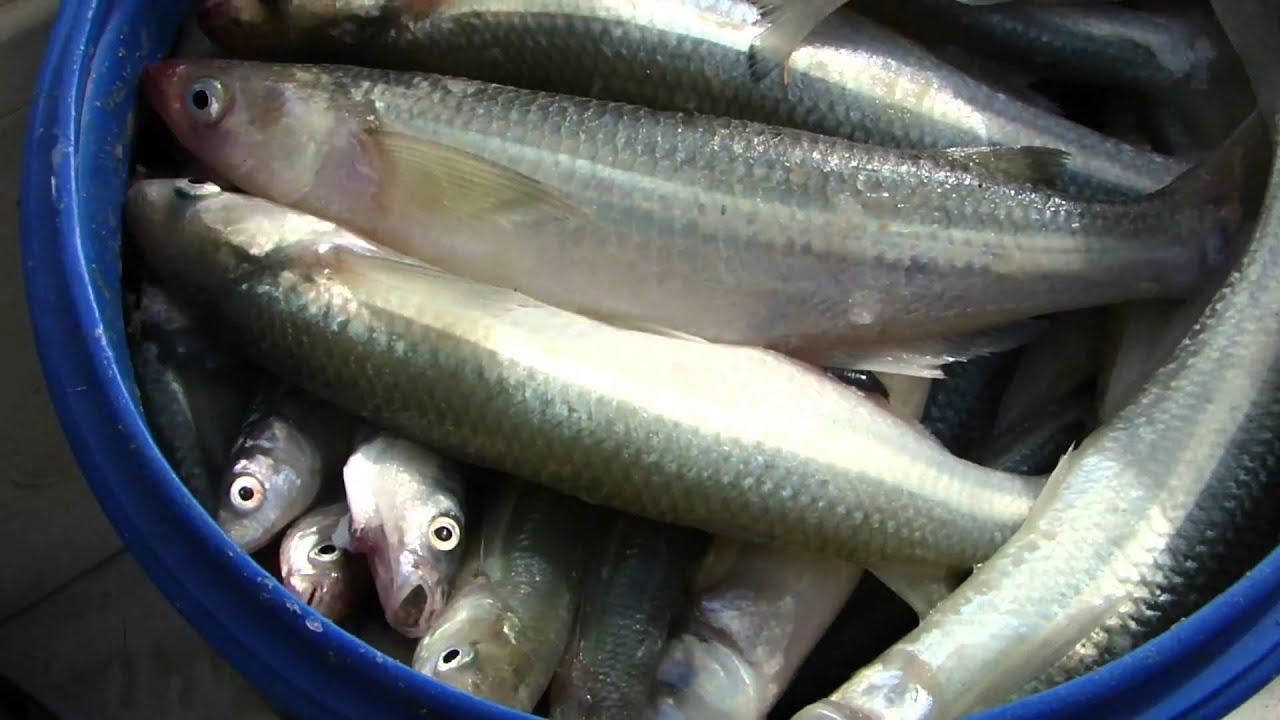 Dia de pesca - 2 5